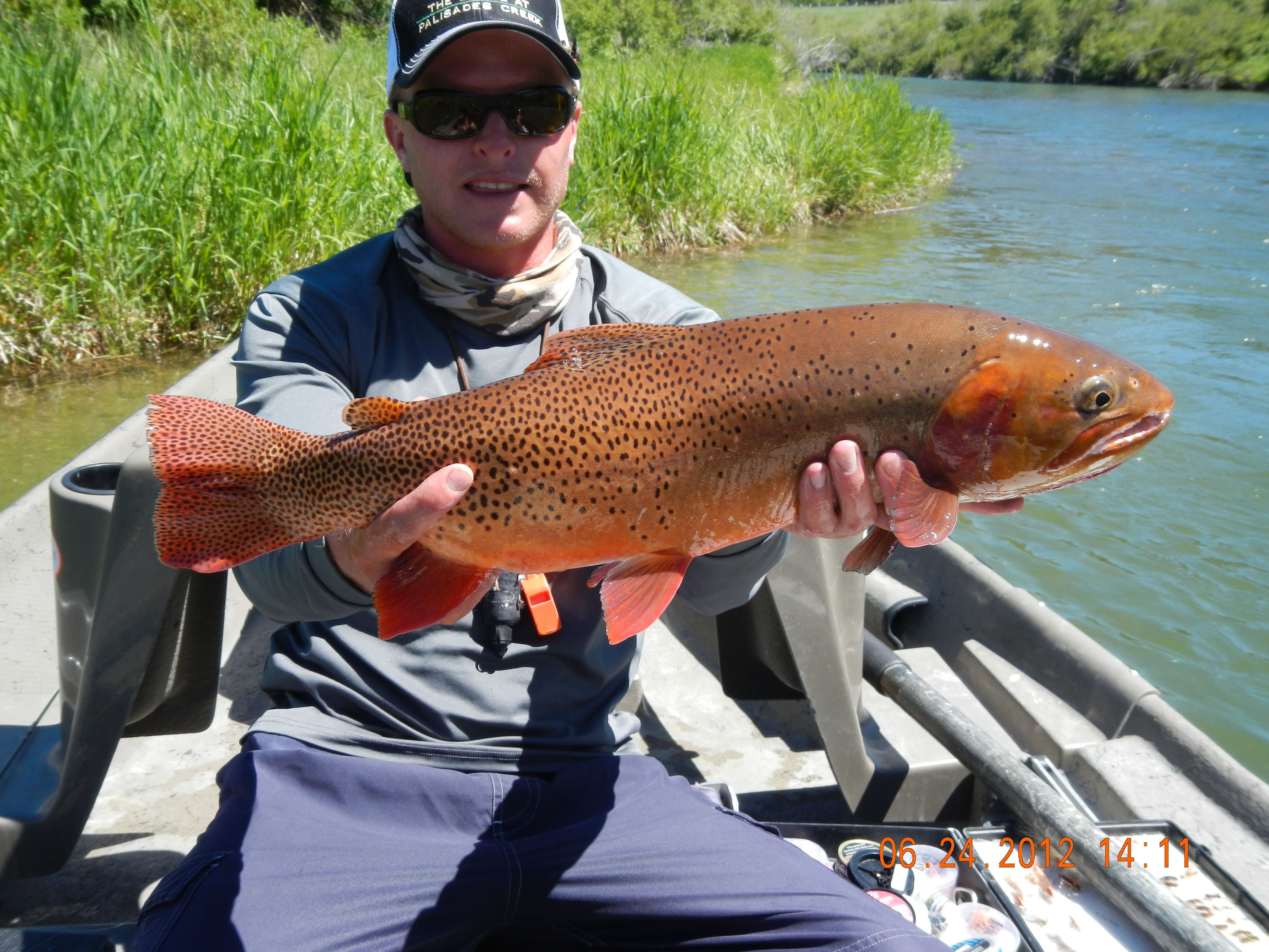 The south fork of snake river the lodge at palisades creek for Snake river fly fishing